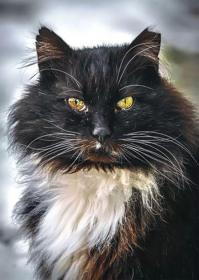 流浪猫的庄严肖像 - 后花园网文 - 精彩图片