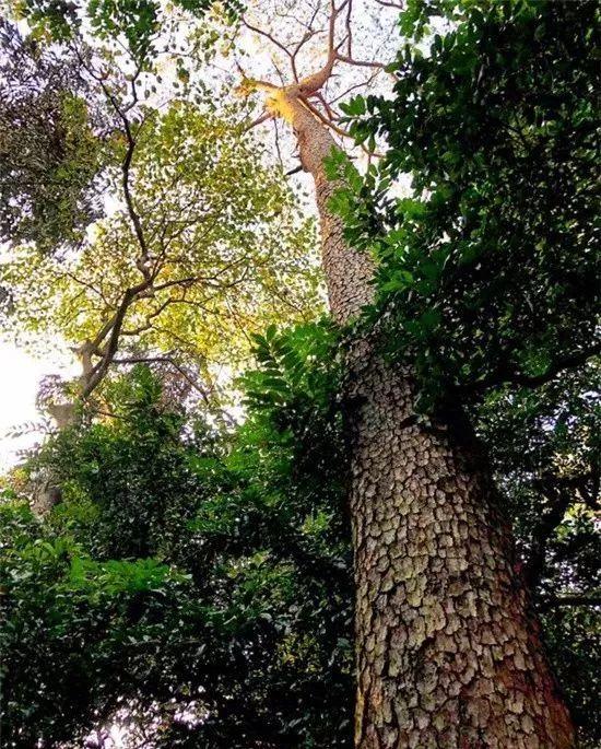 贵港          风景秀丽的贵港桂平西山风景区,绿树环绕,山溪流淌