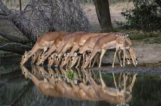 罕见的动物大合照,美得不可思议!
