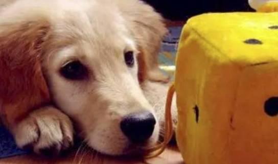 我们为什么要养狗?也许这就是最好的答案吧! - 后花园网文 - 趣味生活