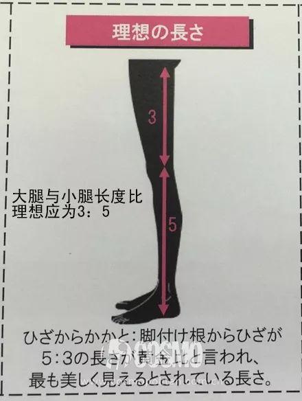 标准:当大腿与小腿长度比为3:5时,是最理想的标准比例.