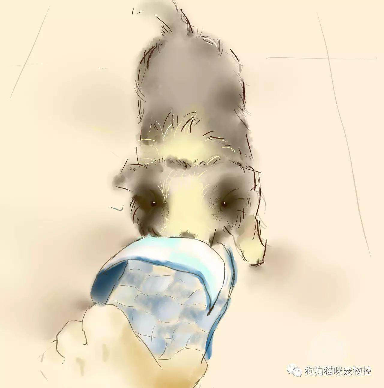 对狗掏心掏肺,等于自己买罪 - 后花园网文 - 趣味生活