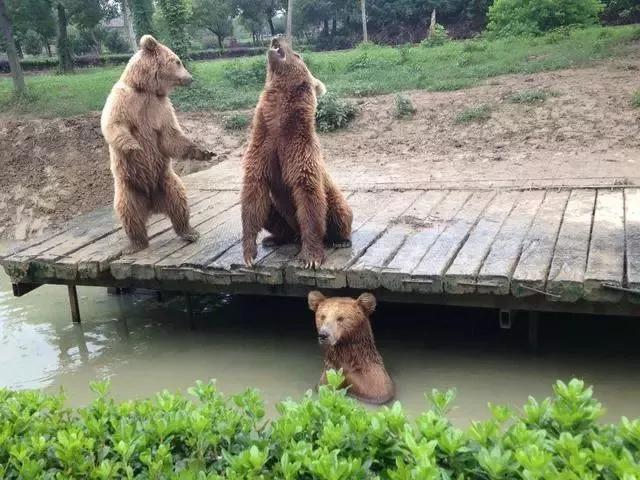 南通森林野生动物园遭网友质疑!动物热死?票价不合理?
