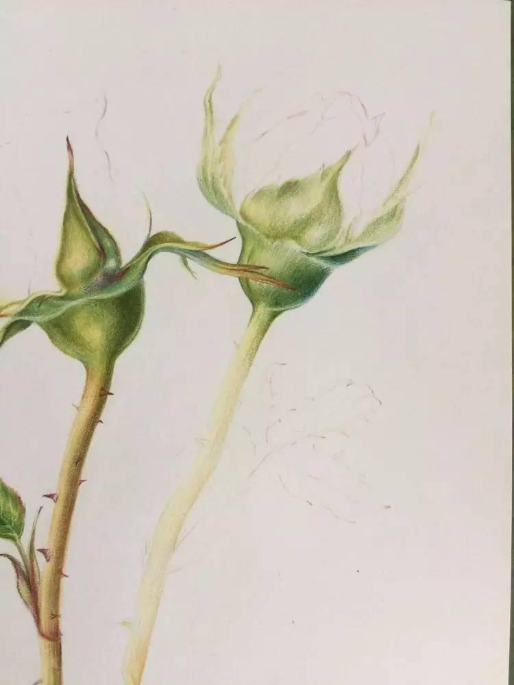 叶子的脉络是刮画的方式,可以去参考一下,我的其它文章,主页