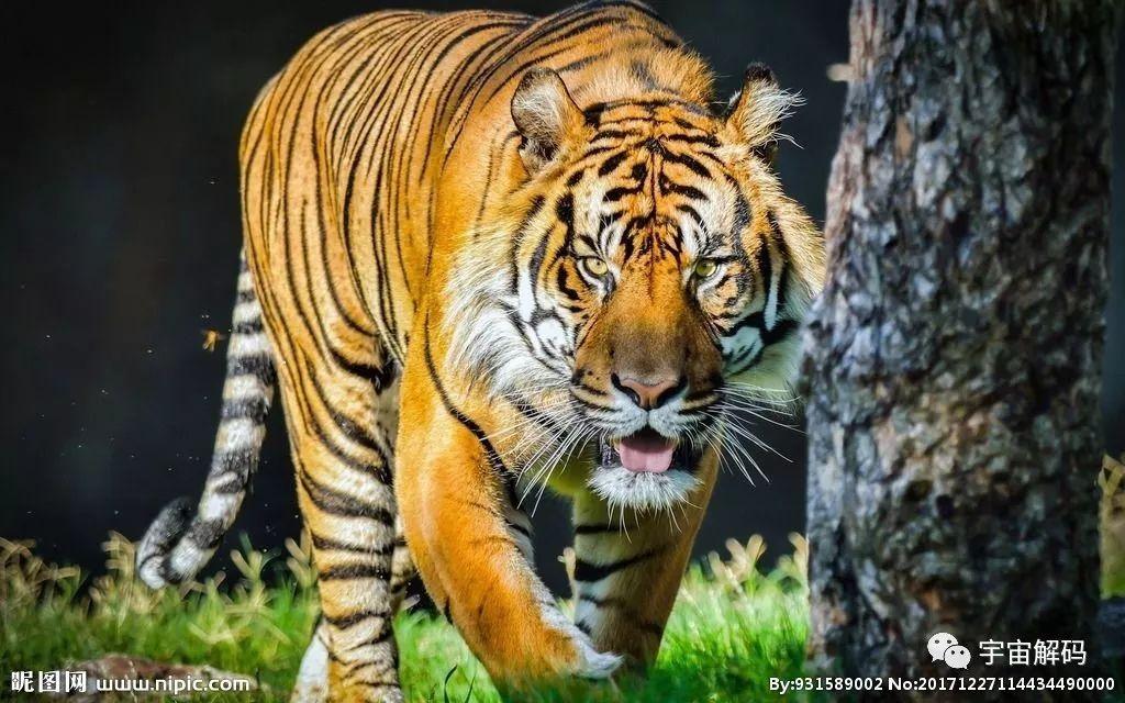 十大猫科动物:狞猫,猞猁,美洲狮