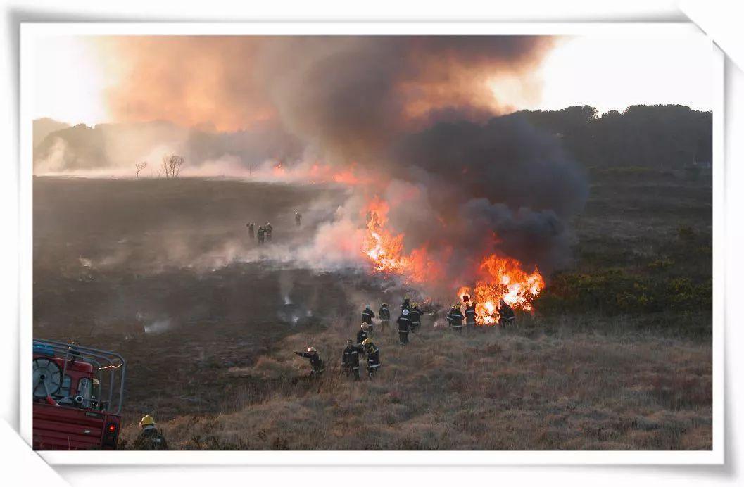 由于树木已经烧毁,就不会再起火,所以在森林火灾中,可以利用火烧迹地