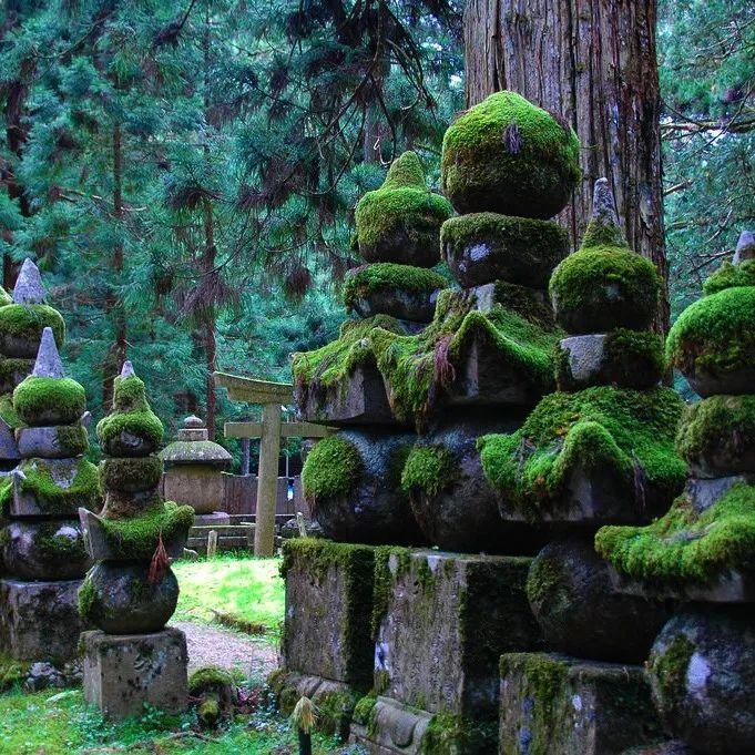 宫崎骏电影《幽灵公主》的森林场景原型.