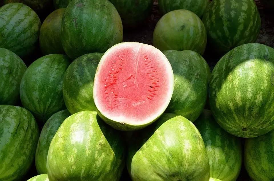 吃瓜群众,你知道西瓜祖先是白瓤的吗? - 老泉 - 把酒临风的博客