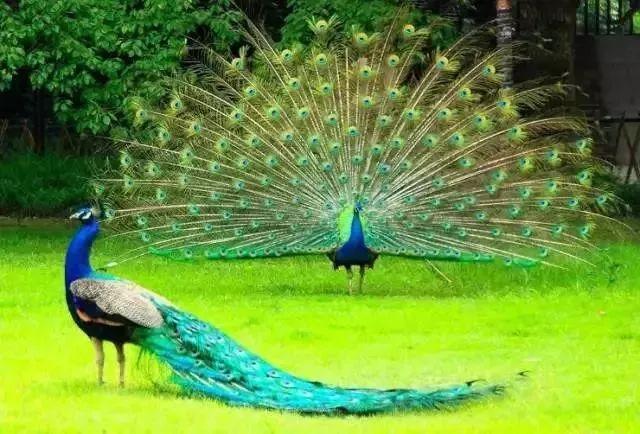 体验动物神奇,激发求知欲望   探索原始森林奥秘