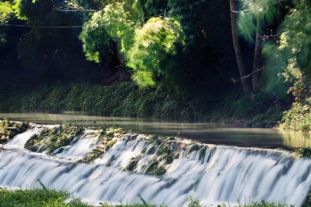 在林中漫步,走过斑驳的竹林,走过光绪年间的金鸡桥,潺潺的溪水在