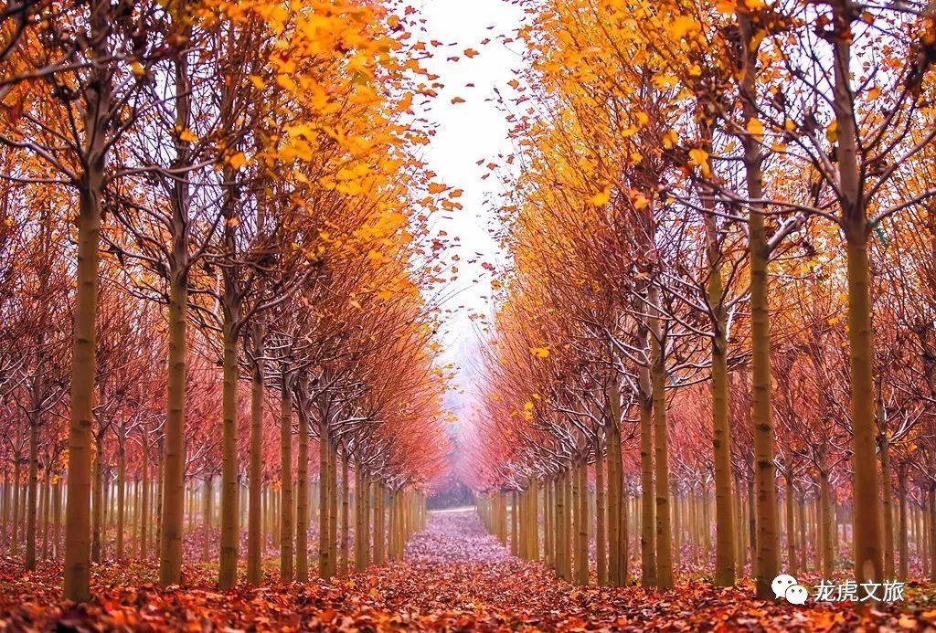 壁纸 风景 森林 桌面 1024_693