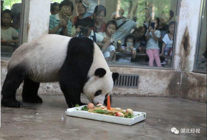 据武汉当地媒体报道,19号晚,武汉市动物园管理处再发通报称