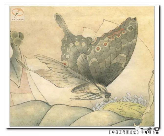 李晓明工笔草虫设色步骤图汇总,值得收藏!