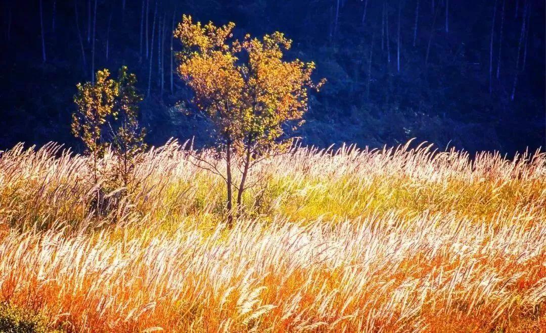 """涠洲岛,漓江等20处广西美景被《中国国家地理》杂志认证为""""最美观景"""