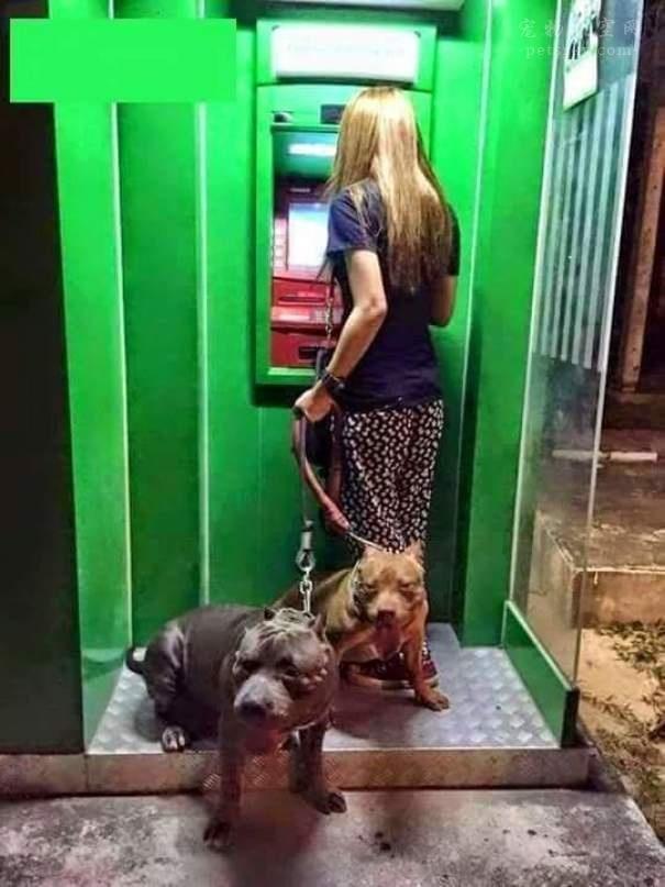 带着狗狗,在ATM取款机前不用,再也高手担心被取钱手把手教你如何养鱼图片