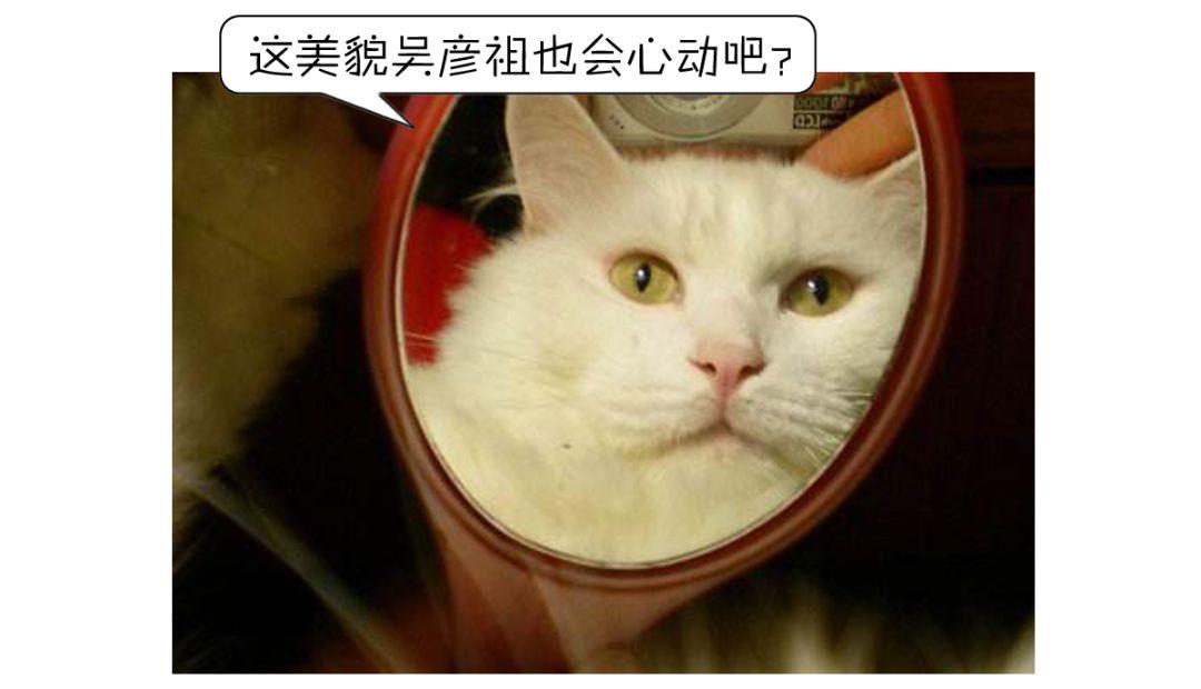 为什么镜子里的你那么好看,拍照却那么丑?