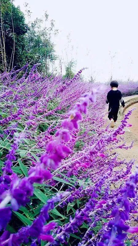 紫色 街道女生 头像背影
