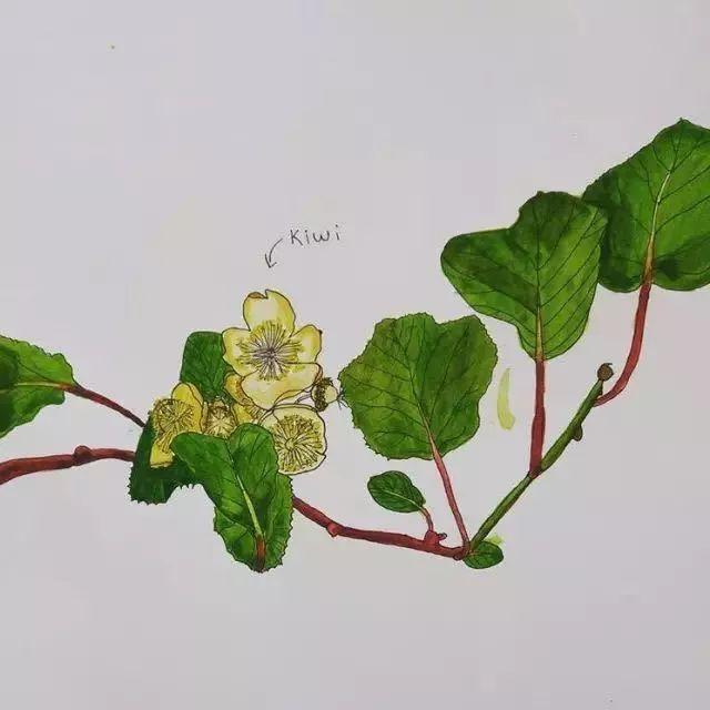 荷兰画家每天画一种蔬果 用水彩笔绘出 百草园