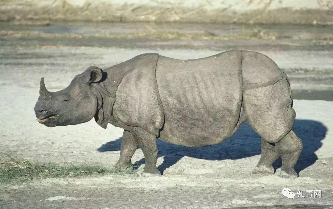 【泰 国的国宝——大象】