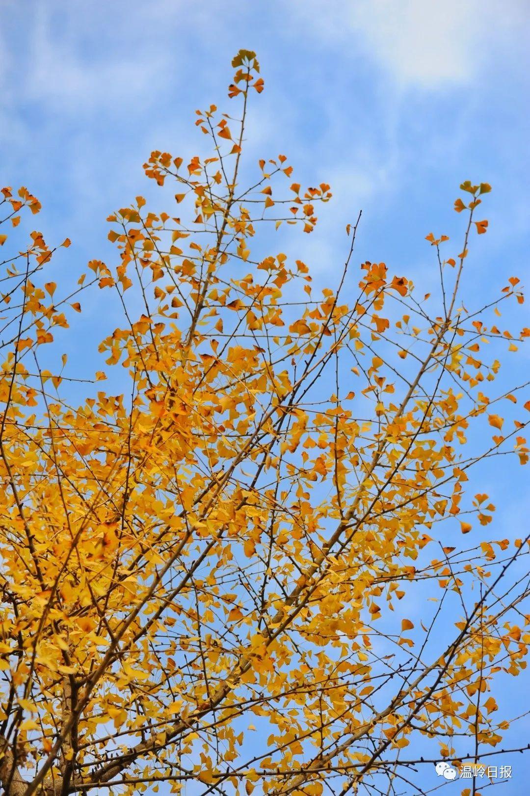 狂推!溫嶺這幾個網紅地,承包你整個秋天的美照!