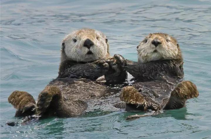 克服脸盲:如何区分这些带「海」字的动物