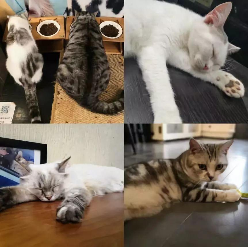 有猫咪,还有两三只可爱的 短腿柯基,很友好亲切,但是猫猫就比较高冷了