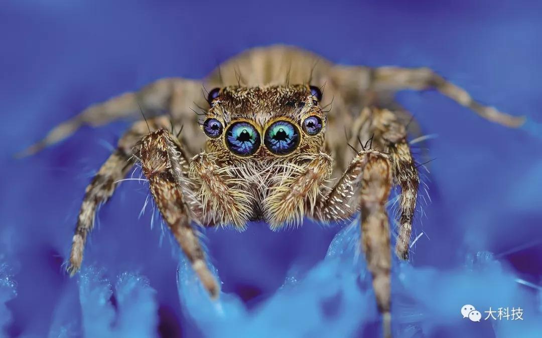 奇特的动物眼睛