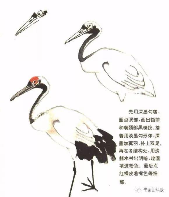 丹顶鹤写意画法图例