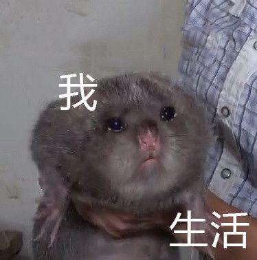 吃竹鼠的100个理由,太丧心病狂了,哈哈哈!开学表情包图片的不想图片