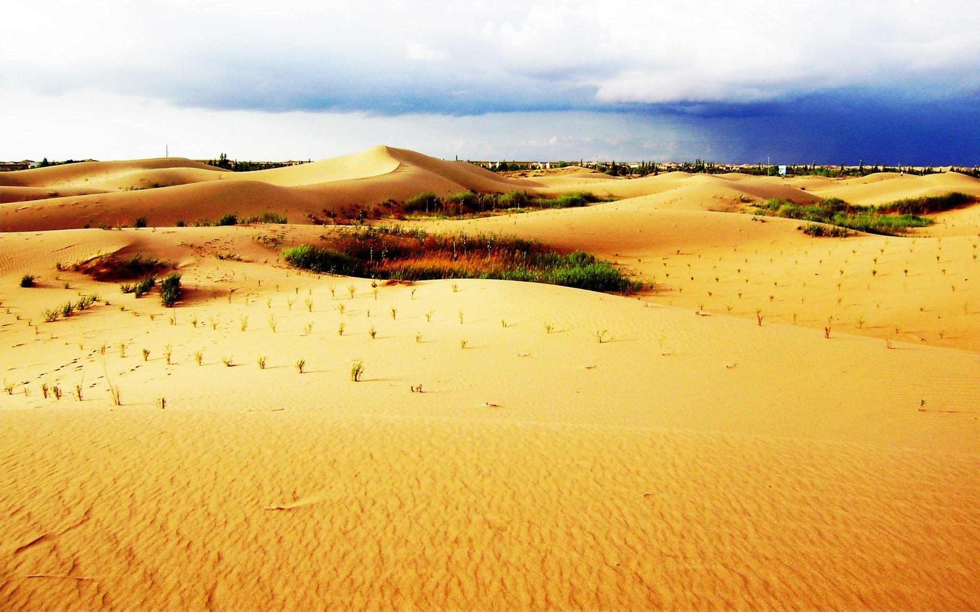 壁纸 成片种植 风景 沙漠 植物 种植基地 桌面 1920_1200