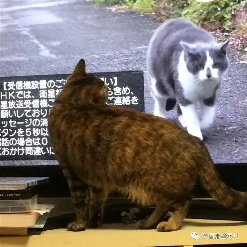 這些喵星人的風騷走位...有喵的人家看個電視也不容易啊