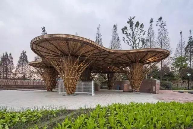 农村竹园风景图