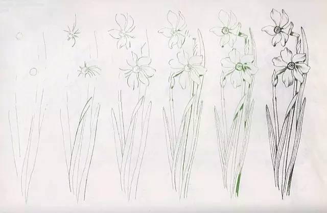 彩铅课堂211|自学画画50种花的画法