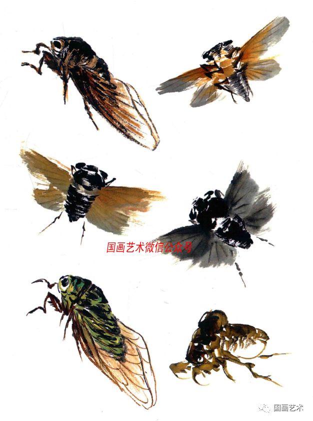 赵树海老师画蝉步骤示范   来源:《写意草虫》   笔蘸浓墨从背部