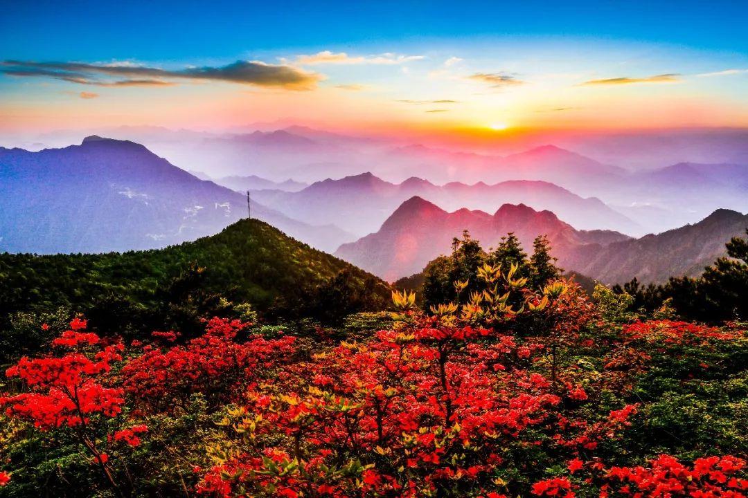 丽水龙泉山已被杜鹃花海包围,美到窒息!