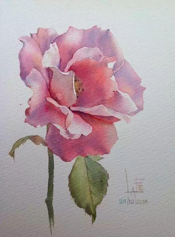 玫瑰花是女生永远的主题   也永远画不厌   用彩铅画玫瑰   用