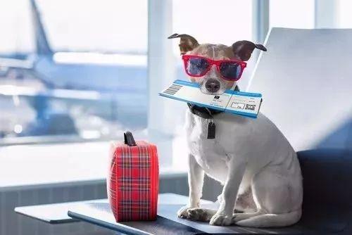 飞机上抱着狗,撸着猫,玩手机.你的愿望实现了