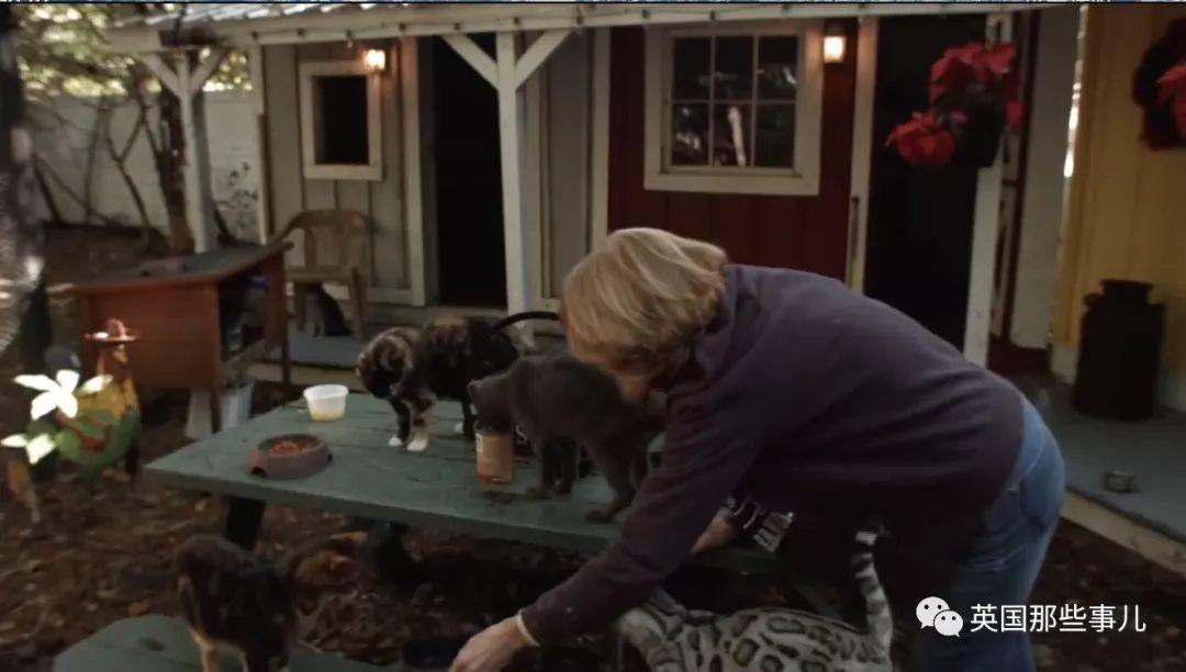 人生第一隻喵離去後,他倆為其他老貓辦起一所