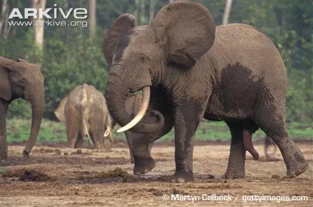 世界大象日,动物园的象也需要关注