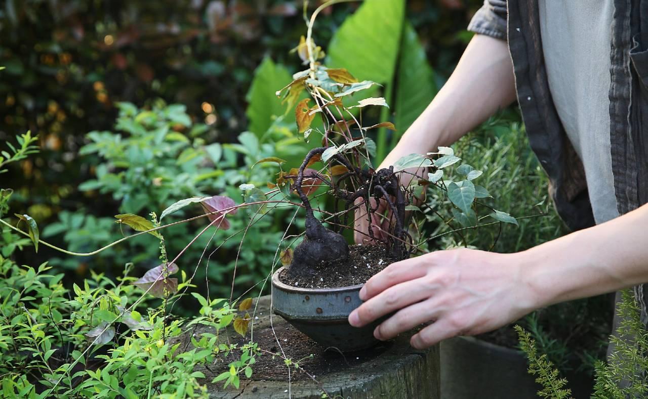 一个人生活,如何提升幸福感? - 后花园网文 - 精美网文