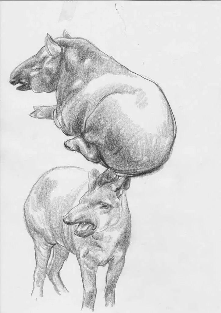 速写| 动物类速写素材,带你领会线与面的魅力图片
