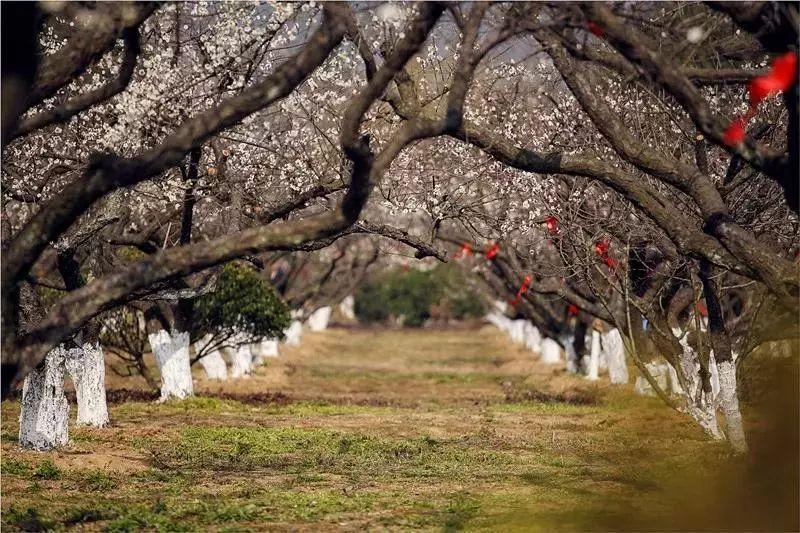 马涧龙池景区,苏州太湖国家湿地公园,大阳山文殊寺