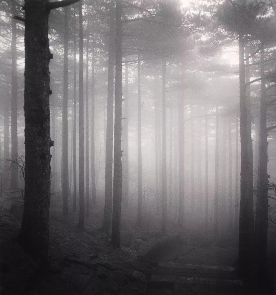 黑白风景摄影师镜头下的树,会说话!