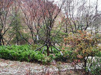 青岛的初雪已签收,接下来还有.