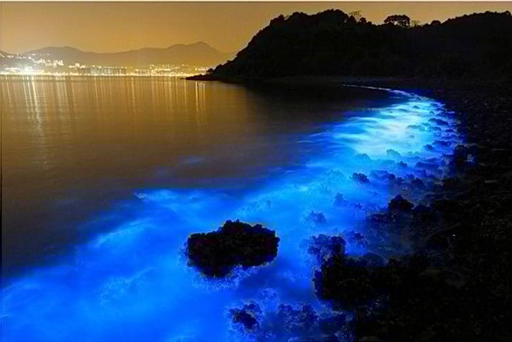 10,印度洋明亮的蓝色海岸图片