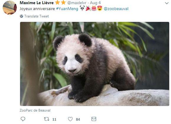 """在法国出生的熊猫""""圆梦""""满1岁啦!"""