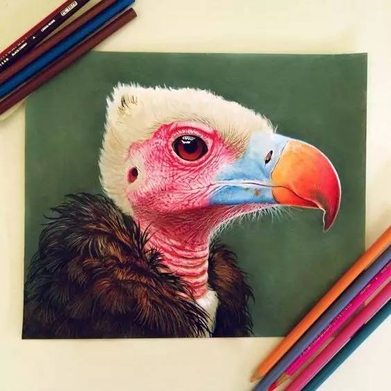 超写实的彩铅动物画,看第一张就跪了!