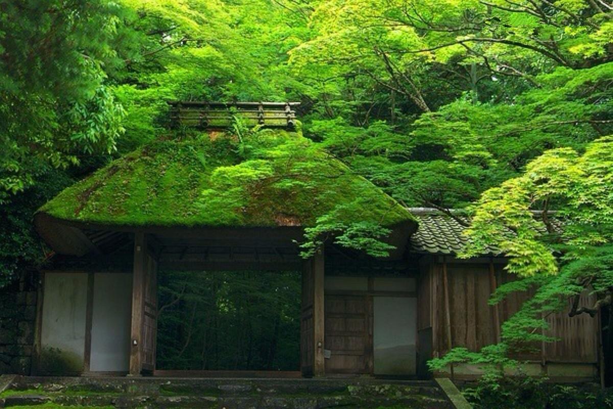寺内郁郁青青的树木让人静心,寺内的牡丹艳绝长安,一些罕见的外来