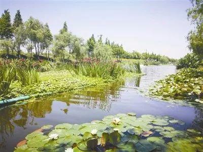 大江东河庄街道的江东村巧客小镇已正式开镇这几个大美丽乡村你认识吗?