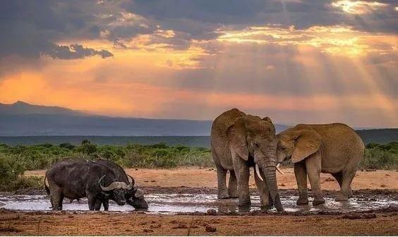 想去南非看动物,有哪些推荐?